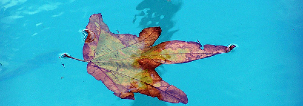 Keeping Your Pool Clear of Falling Leaves